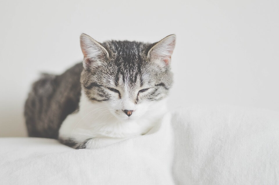 ベッドの上で香箱座りする猫