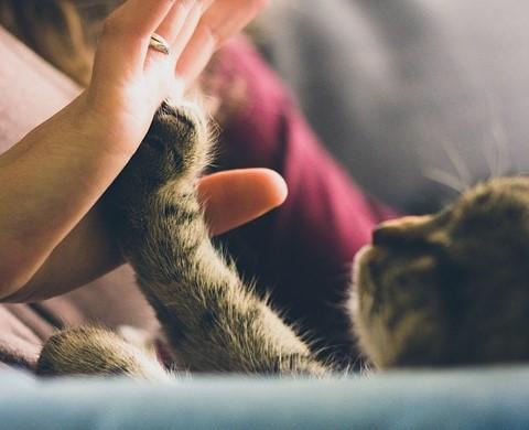 女性とハイタッチする猫