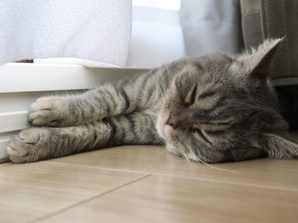 窓際でうたた寝する猫