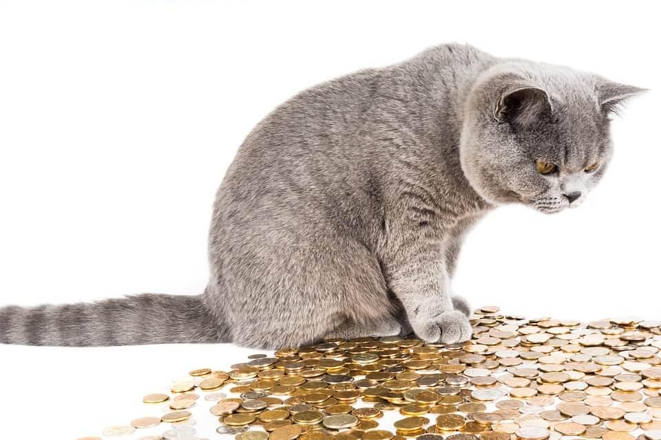 たくさんのコインを見つめる猫