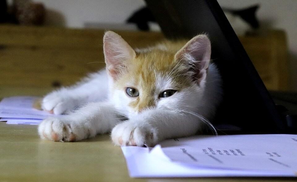 パソコンに寄り掛かって眠る猫