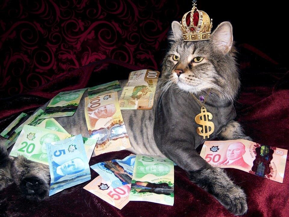 お金に埋もれる王冠をかぶった猫