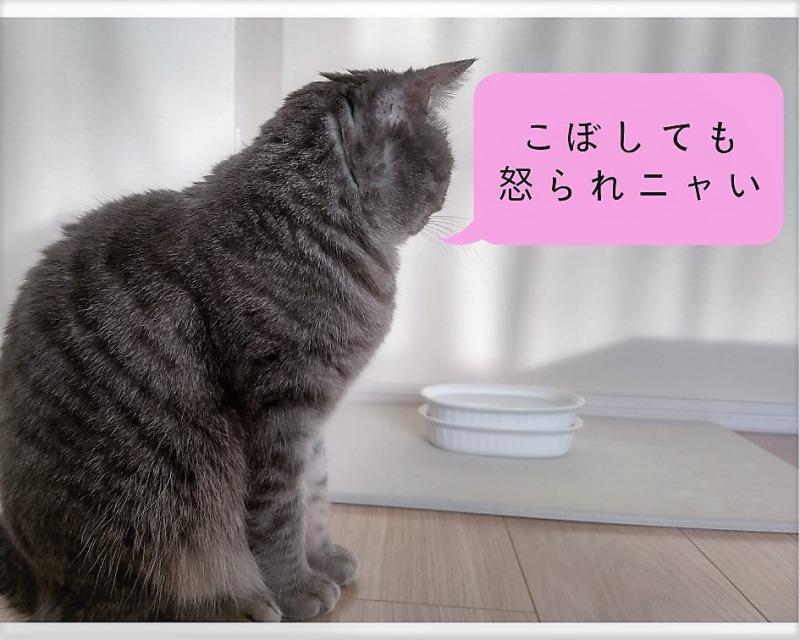 水飲み場を見る猫