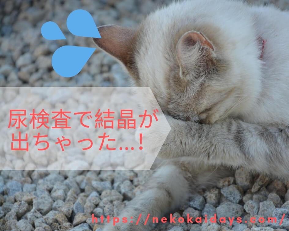 砂場で顔を隠す猫