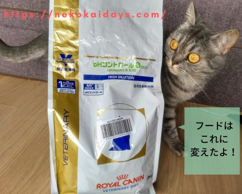 尿路結石用のフードを見る猫