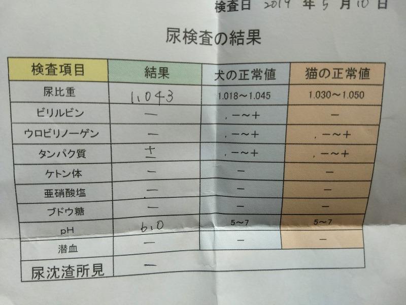 猫の尿検査結果4回目